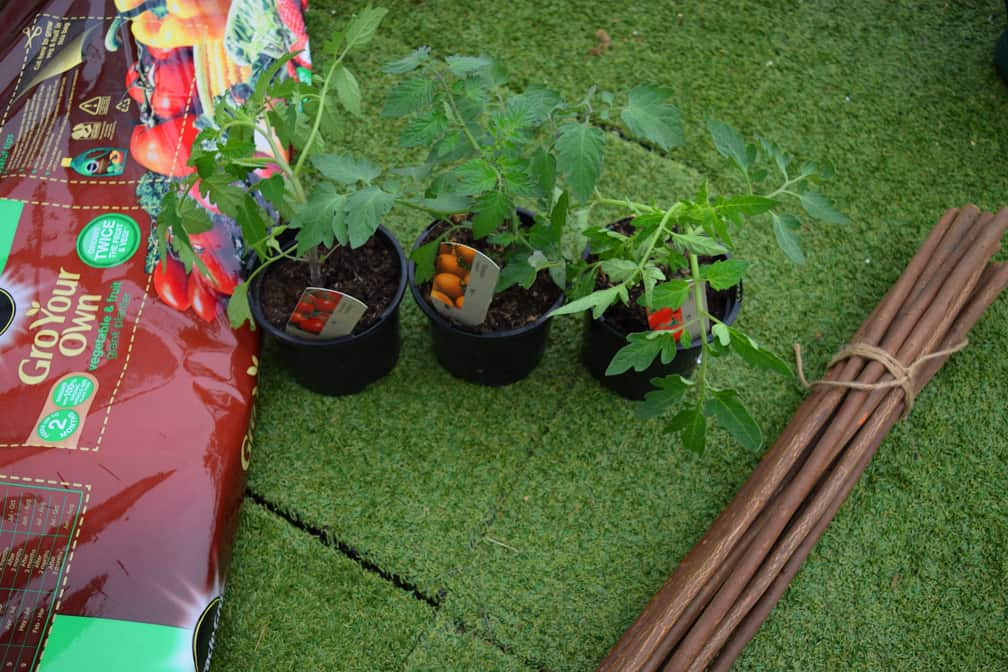 growing and planting your own tomatoes