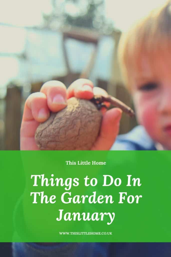 things to do in the garden for January