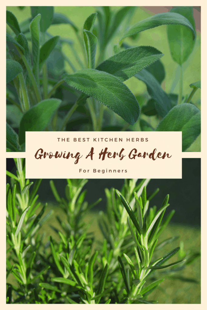 Growing a herb garden for beginners, the best kitchen herbs, uses for herbs