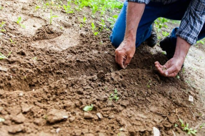 planting your own seeds grow your own plants