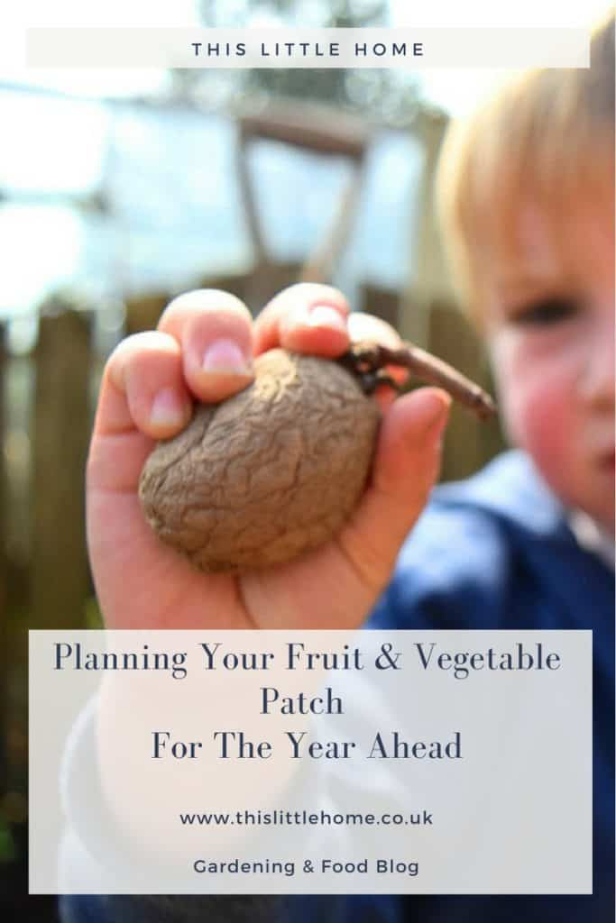 Planning Your Vegetable and Fruit Patch For The Year