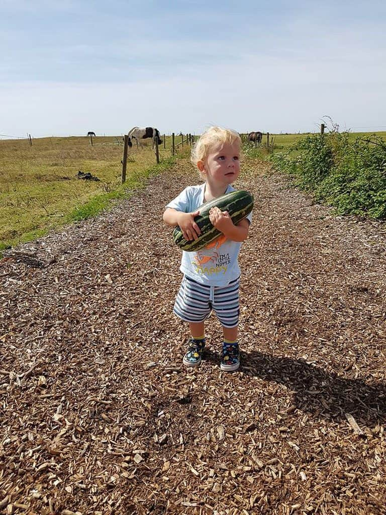 child holding a large courgette