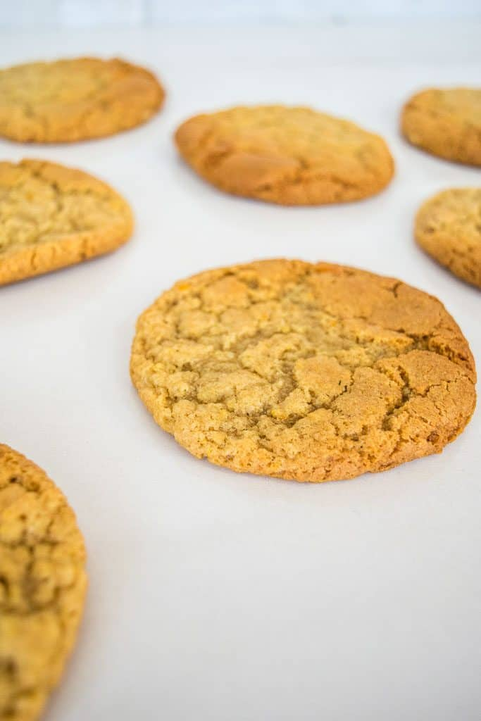ginger nut cookies laid out flat after baking